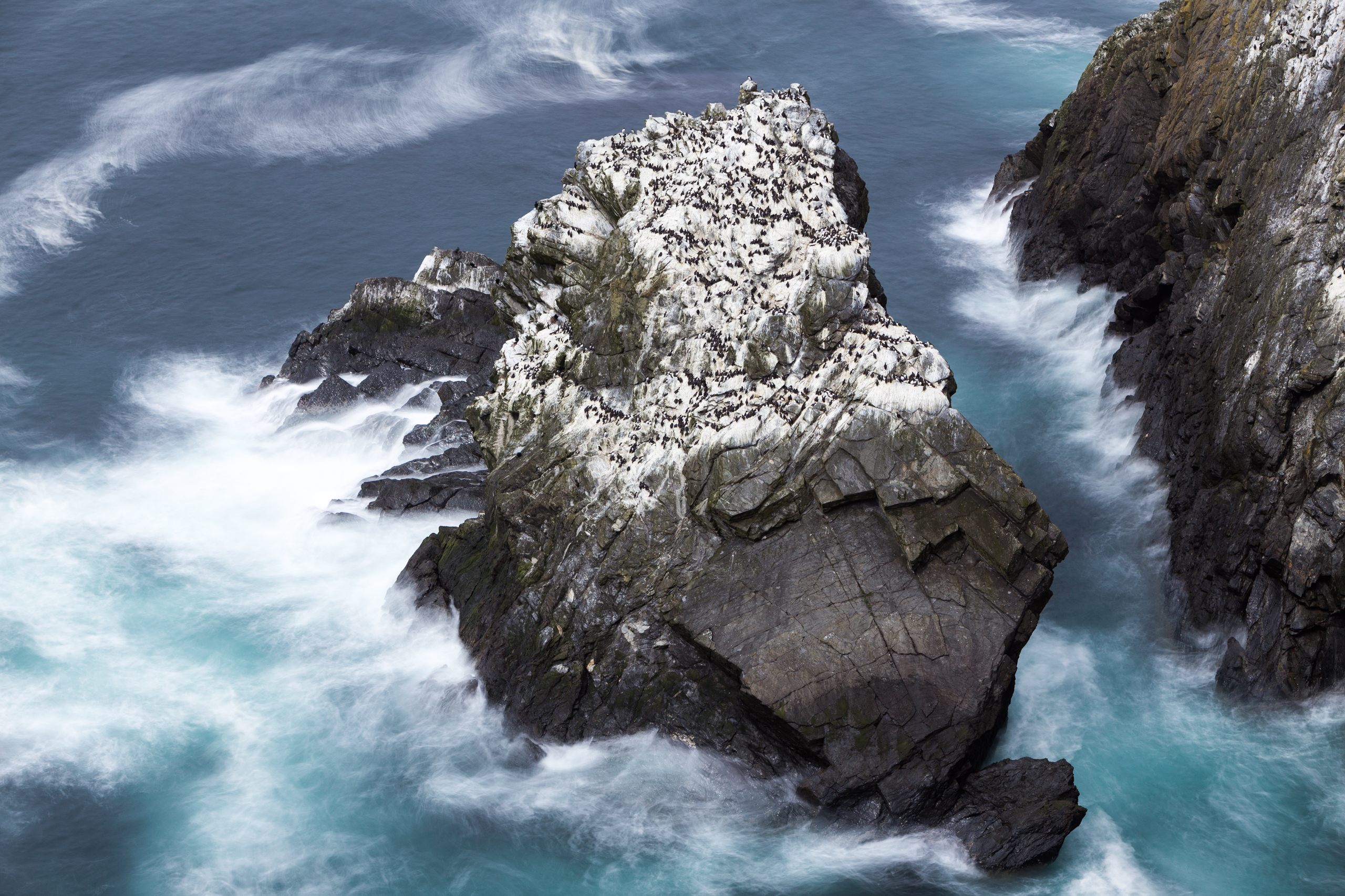 A seabird colony hugs a rocky outcrop.