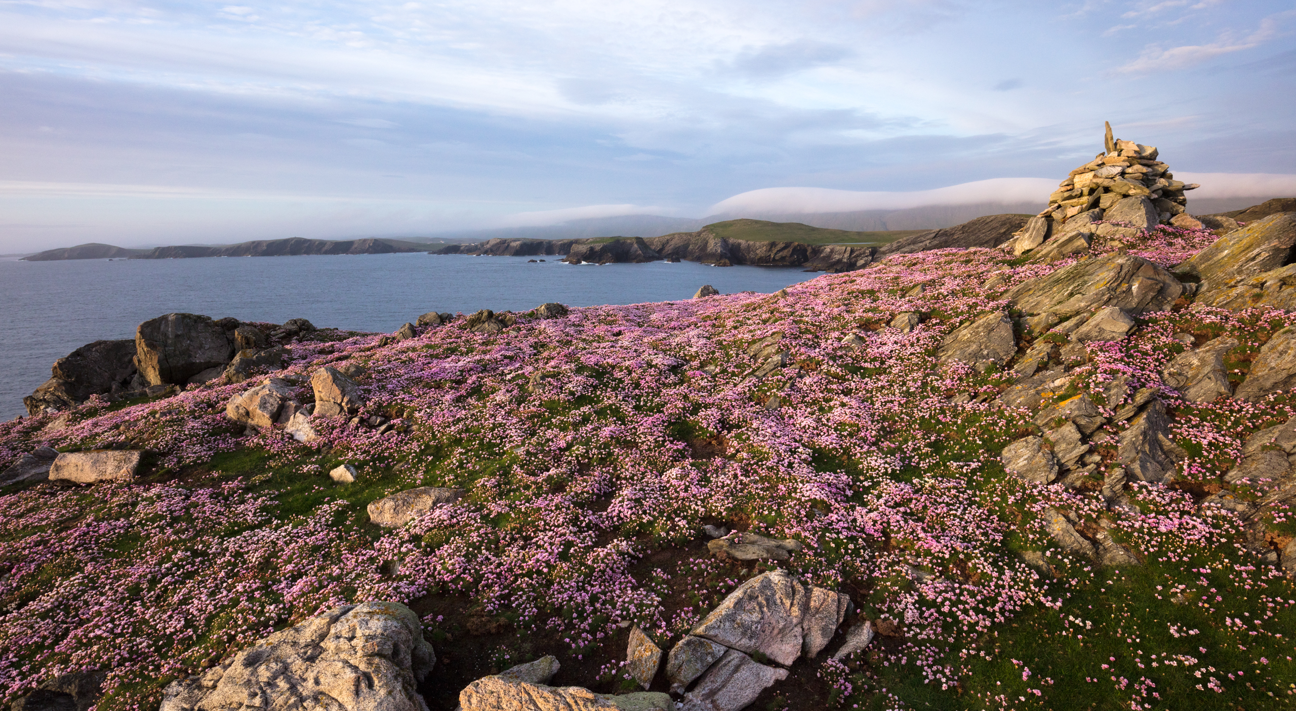 Sea Pinks are found on clifftops in late spring and early summer